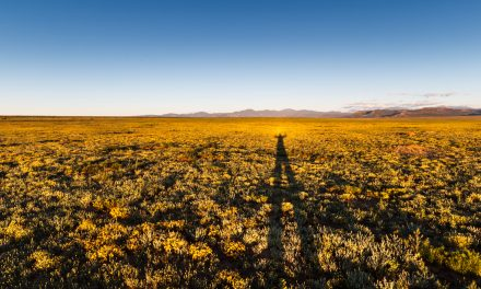 Long Shadow on Prairie