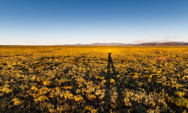 Long Shadow on Prairie