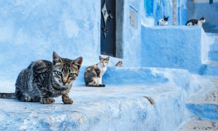 Photo of the Day – Cats and the Blues