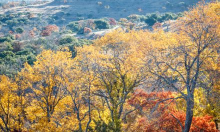 Hill Country Fall Color