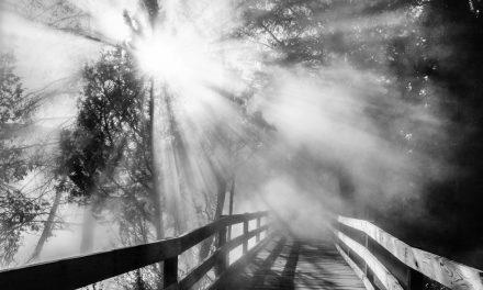 Backlit Sun Through Mist