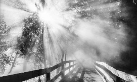 Boardwalk in the Mist
