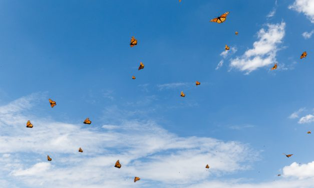 Monarchs and Sky