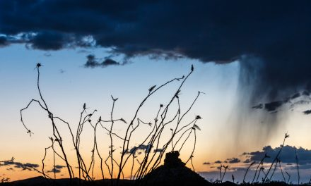 Ocotillo and Storm
