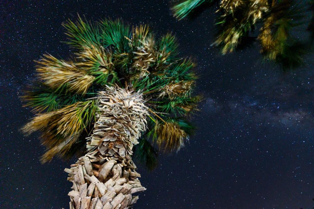 Stars over palm trees, Welder Wildlife Refuge, Sinton, TX, USA.