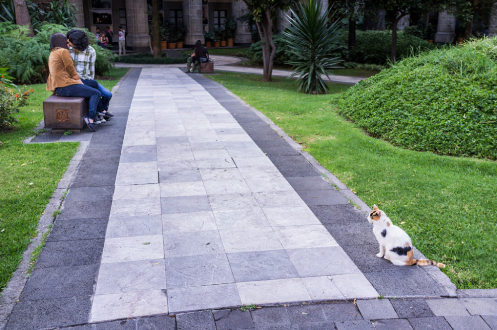 Cat and young lovers in courtyard of National Palace, Mexico City, Federal District, Mexico.