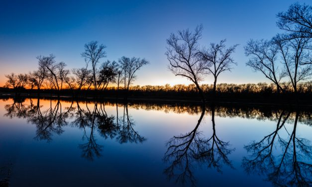 Trinity Forest Reflections