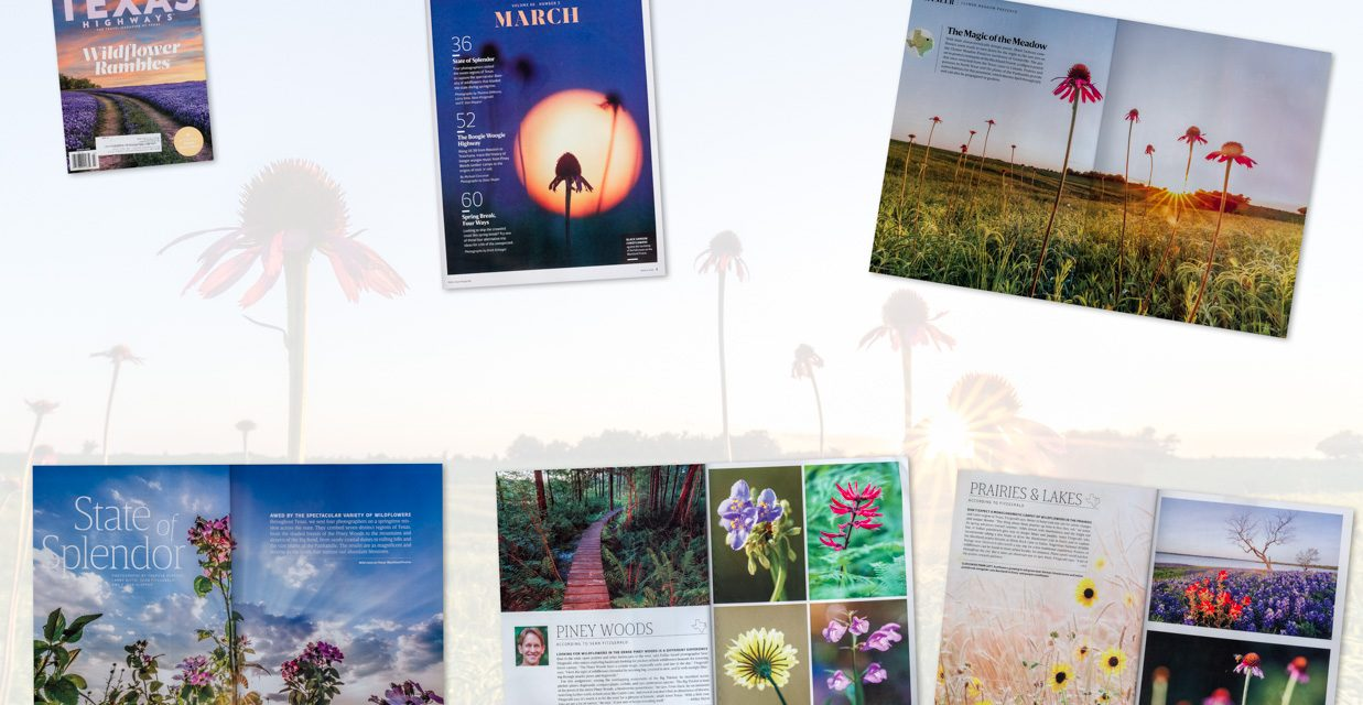 Wildflower Assignment for Texas Highways Magazine